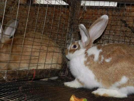кролик в казане фото