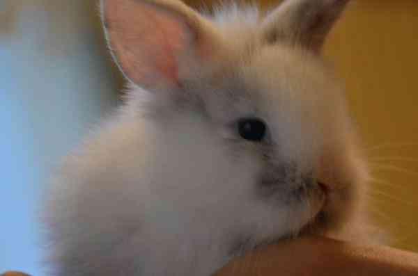 купить крольчат в петропавловске камчатском майор