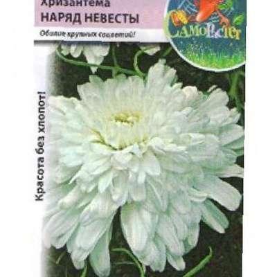Хризантема махровая платье невесты выращивание фото