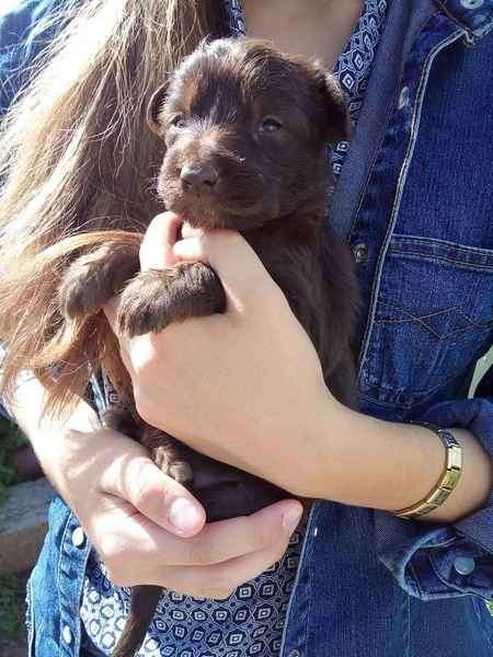 если собаки щенки в дар на авито в улан-удэ для повседневной
