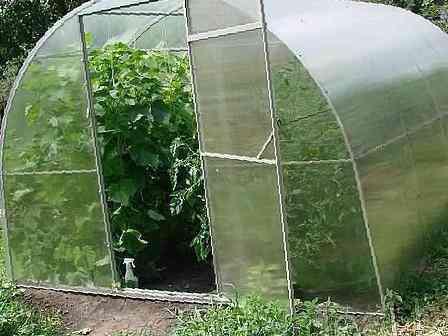 Выращивание винограда в теплицах из поликарбоната