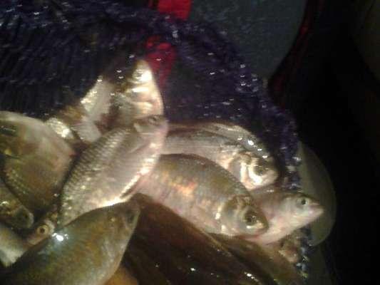 Живец для рыбалки купить в пензе
