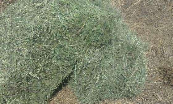 Продажа тюковое сено к кореновске 66
