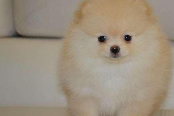 Уникальное изображение стрижка собак стрижка собак в павловском посаде 29290479 в москве