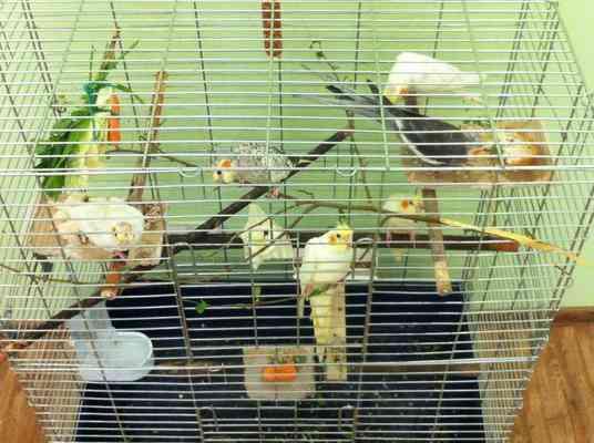 Гнездо для попугаев корелла фото